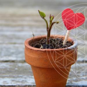 katelijn vanacker Zaadjes van zelfliefde planten